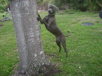 climbing-tree-837136051e21ae882f8a9cc32ff56ebe84c4a4fd