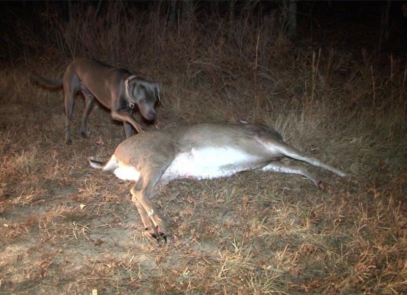 sniper-deer-7-39218e316ee13a8bf22de5b920e1307cdcb0f81e