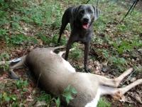snipedog-deer-8-ae097a86c24ecba7c234287ed954dc3972327d03