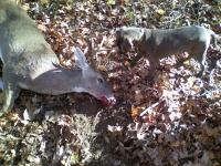 sniper-deer-1-7c1b1b0124cdd4ad88b8438a9886f67157d09638