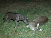 sniper-deer-3-c3adf40f6a6466d878ff1ad596b8b0e911053378