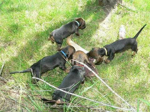 future_tracking_dogs_2_20091021_1646009436