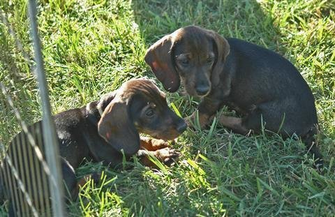 future_tracking_dogs_3_20091021_1959854624
