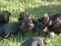 future_tracking_dogs_6_20091021_1267679163