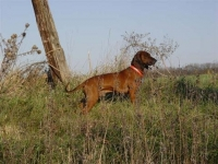 various_tracking_breeds_3_20091021_1350671135