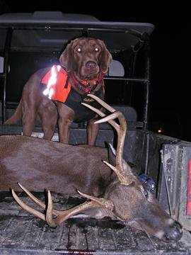 various_tracking_breeds_5_20091021_1506904321